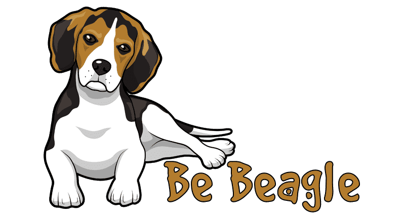 Chien-Beagle.fr